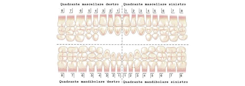 Denti Nomi Numerazione E Denti Del Giudizio Sanident