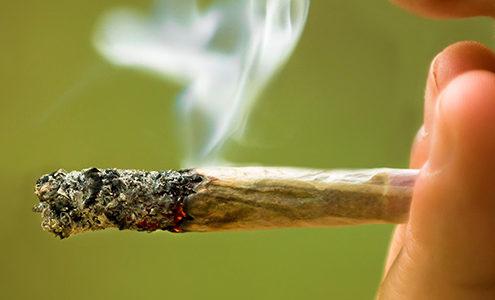 Cannabis-e-parodontite
