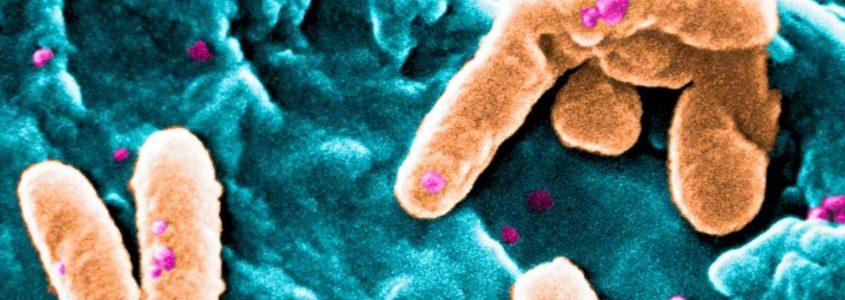 oral microbiota
