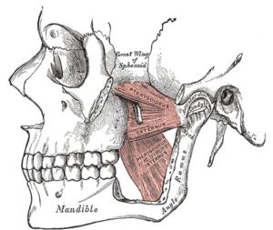 mandibola e mascella
